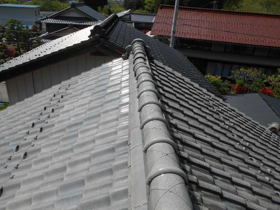 nodainari10267005.jpg